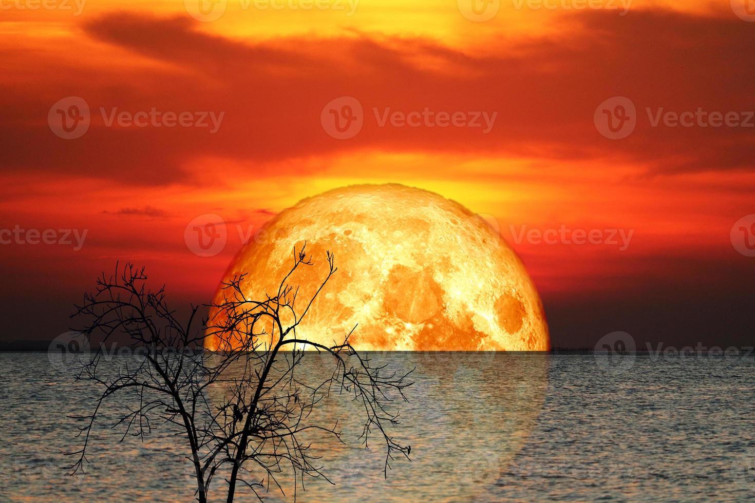 Reflexión corteza llena luna de sangre y silueta de árbol en el cielo nocturno del mar foto