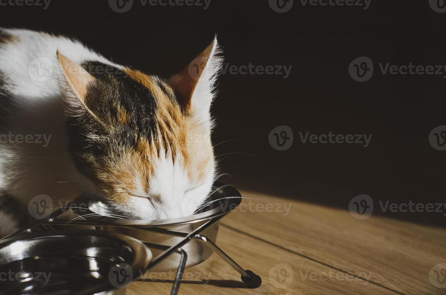 Hungry tricolor cat eats dry food photo