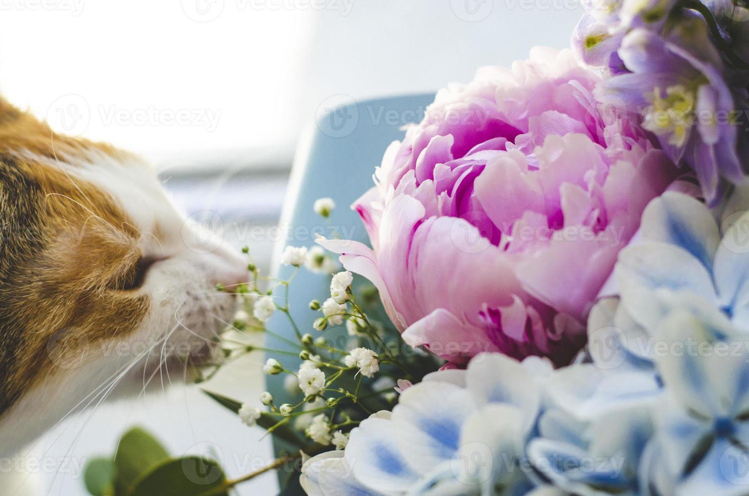 tricolor gato doméstico muerde flores foto