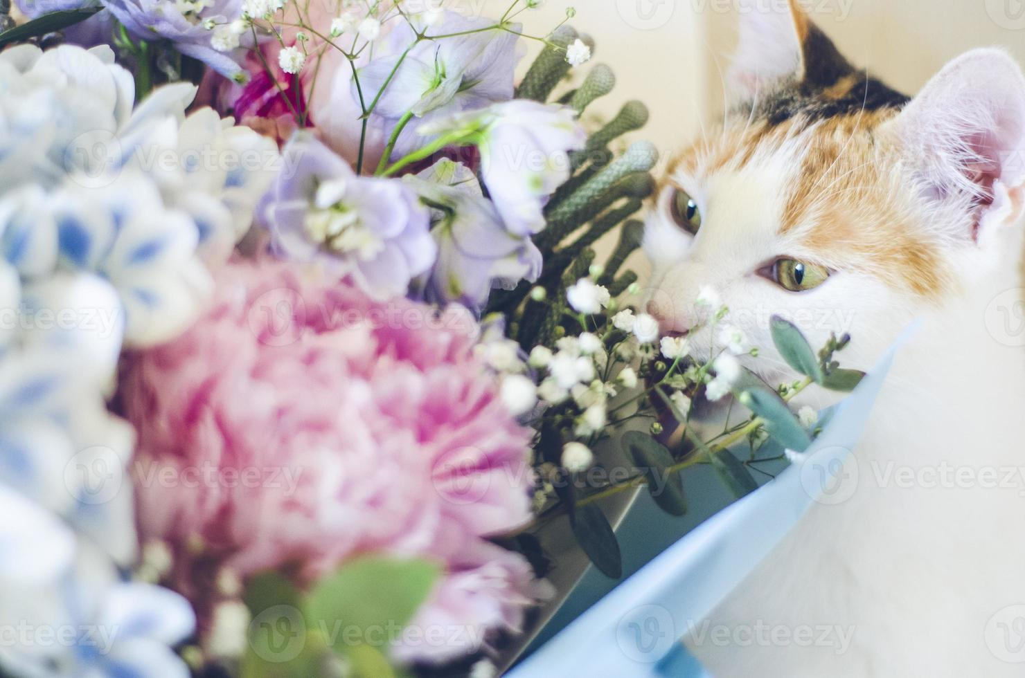 Tricolor domestic cat sniffing the flowers photo