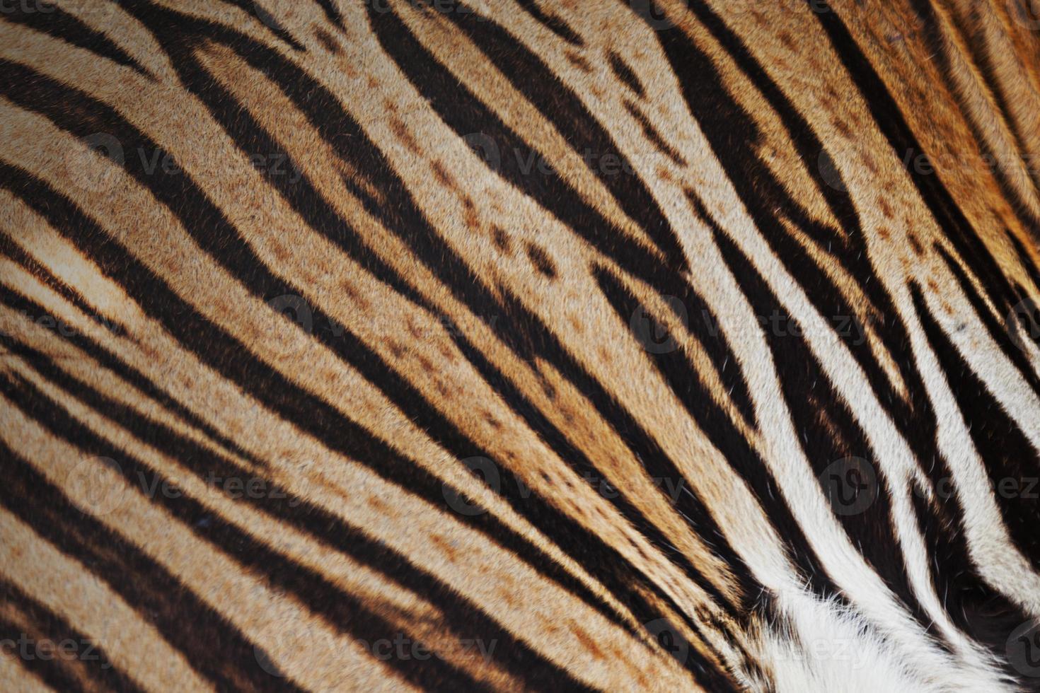 Tiger skin background photo