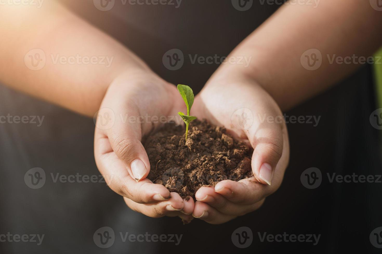 CSR concept and business planting saplings of trees. photo
