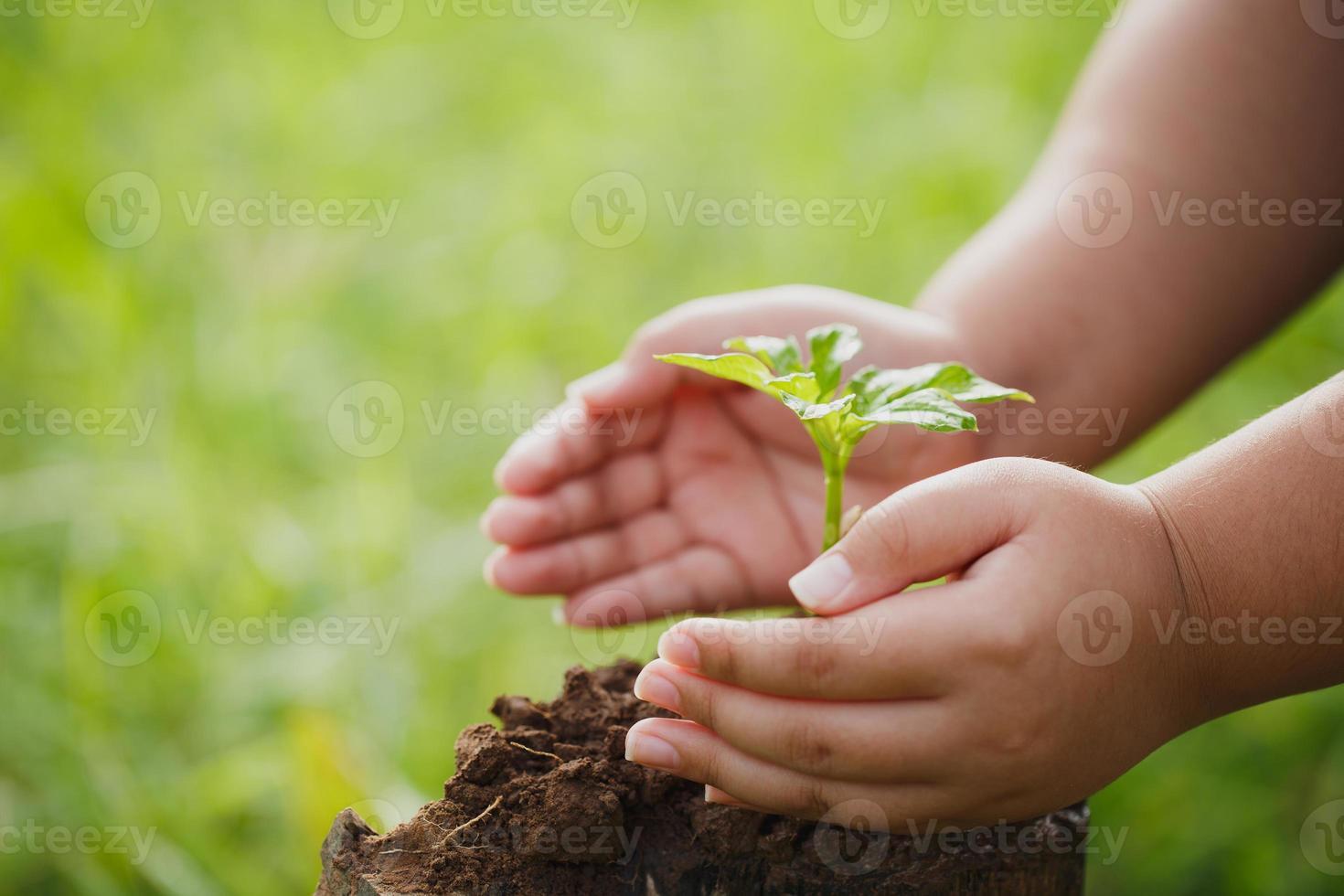 concepto de rsc y plantación empresarial de árboles jóvenes. foto