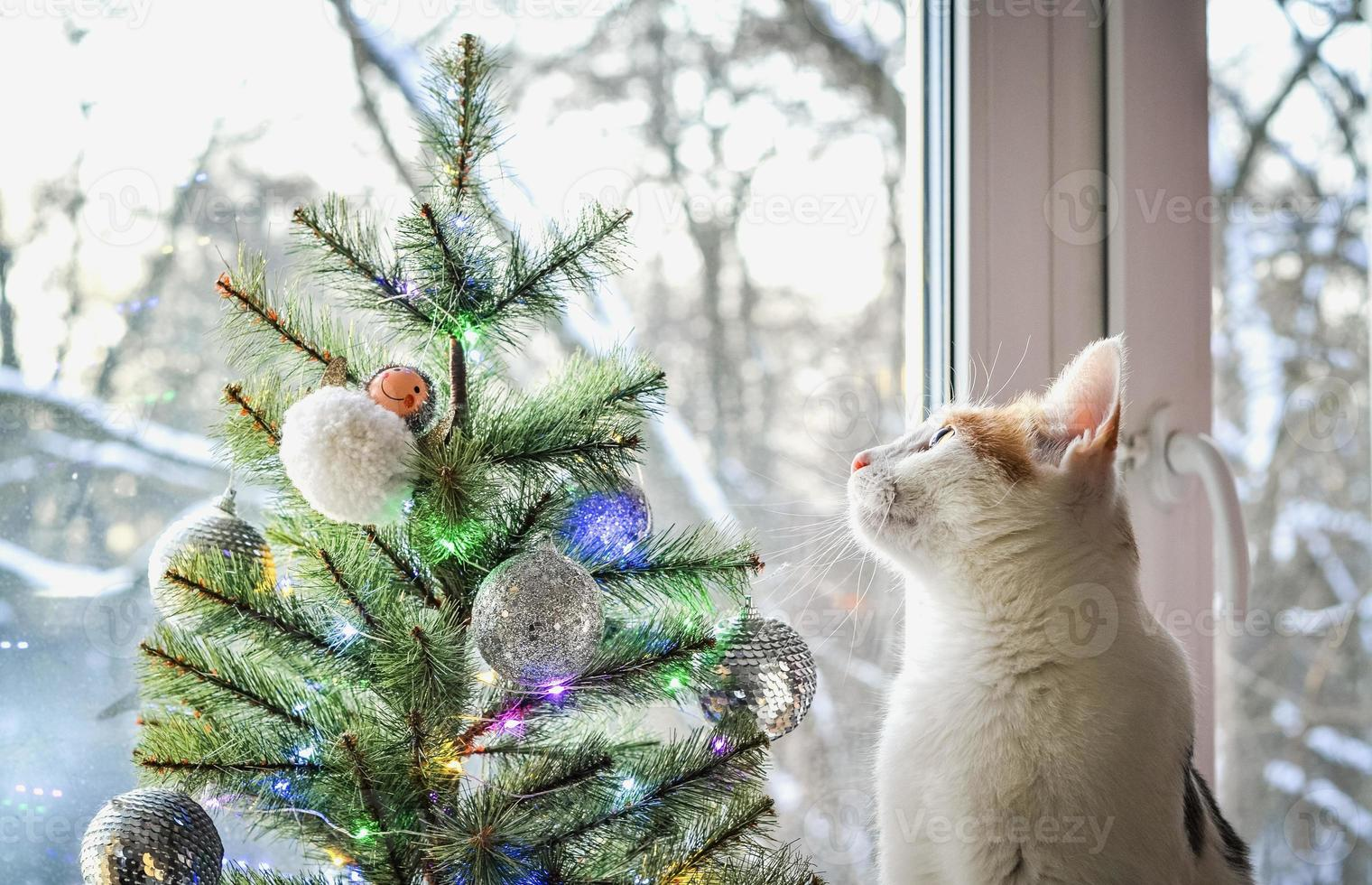 A tricolor domestic cat looks out window. photo