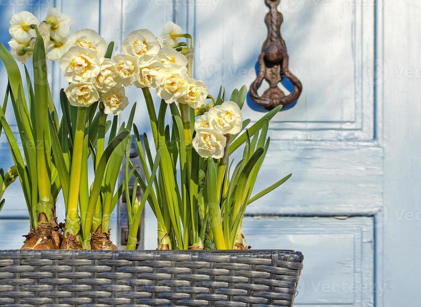 flores de primavera en una maceta en la calle. foto