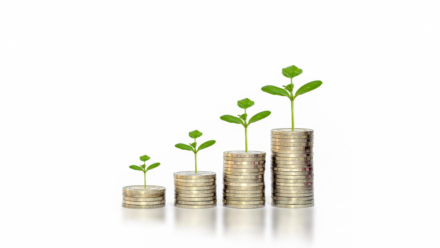 Green leaf plant growth on coin on white background business start idea and business building to success. photo