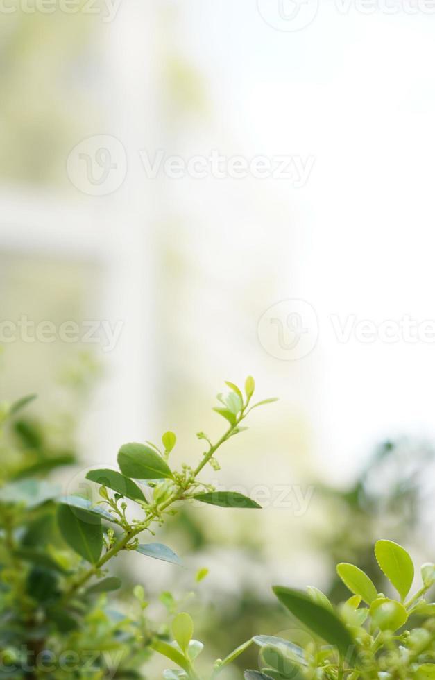 Beautiful spring flowers background, Season theme, hello spring photo