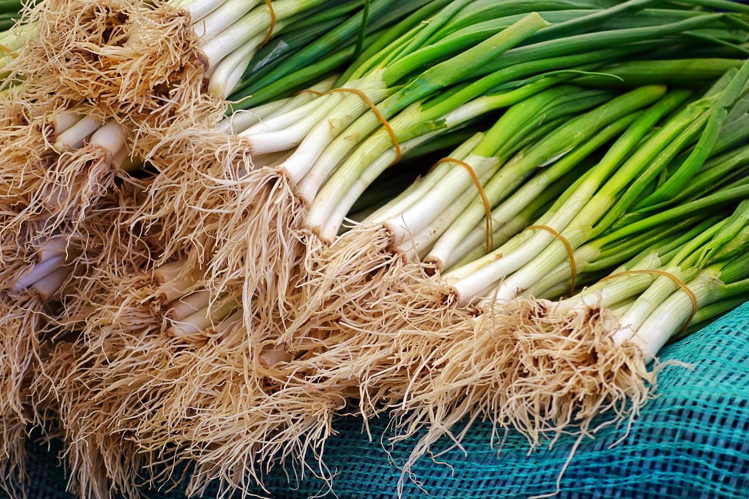 puerro vegetal verde y fresco saludable foto
