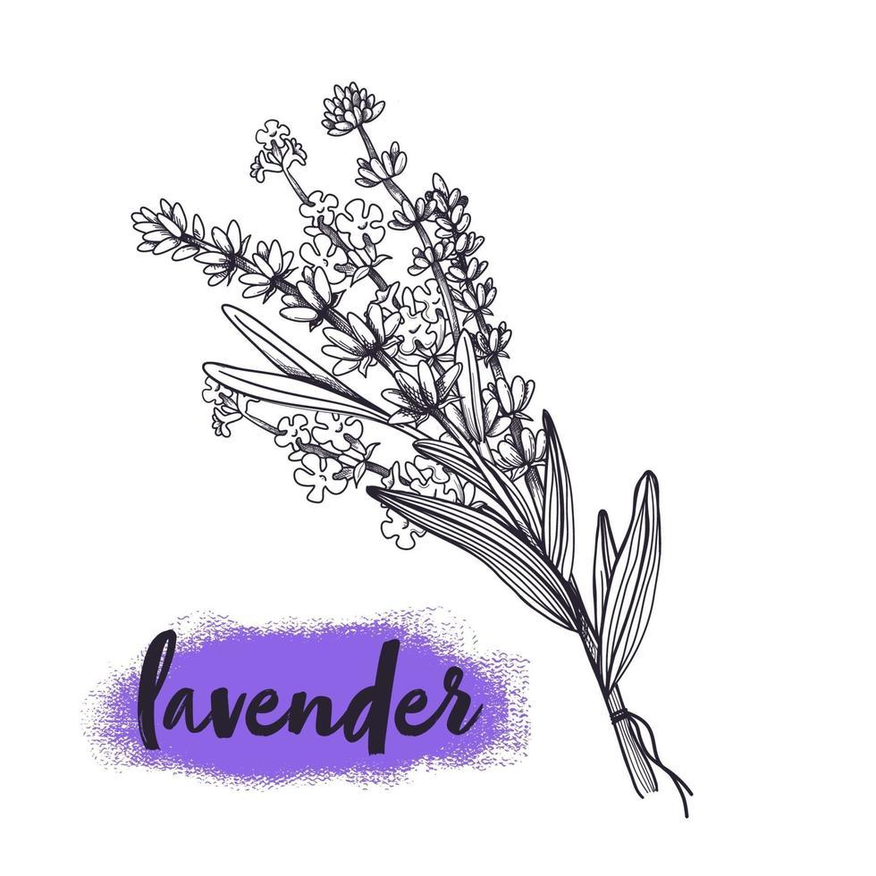 Boceto dibujado a mano de ramo de flores de lavanda. ilustración vectorial vector