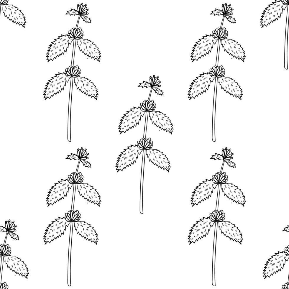 marrubio blanco, bw sin costuras vector