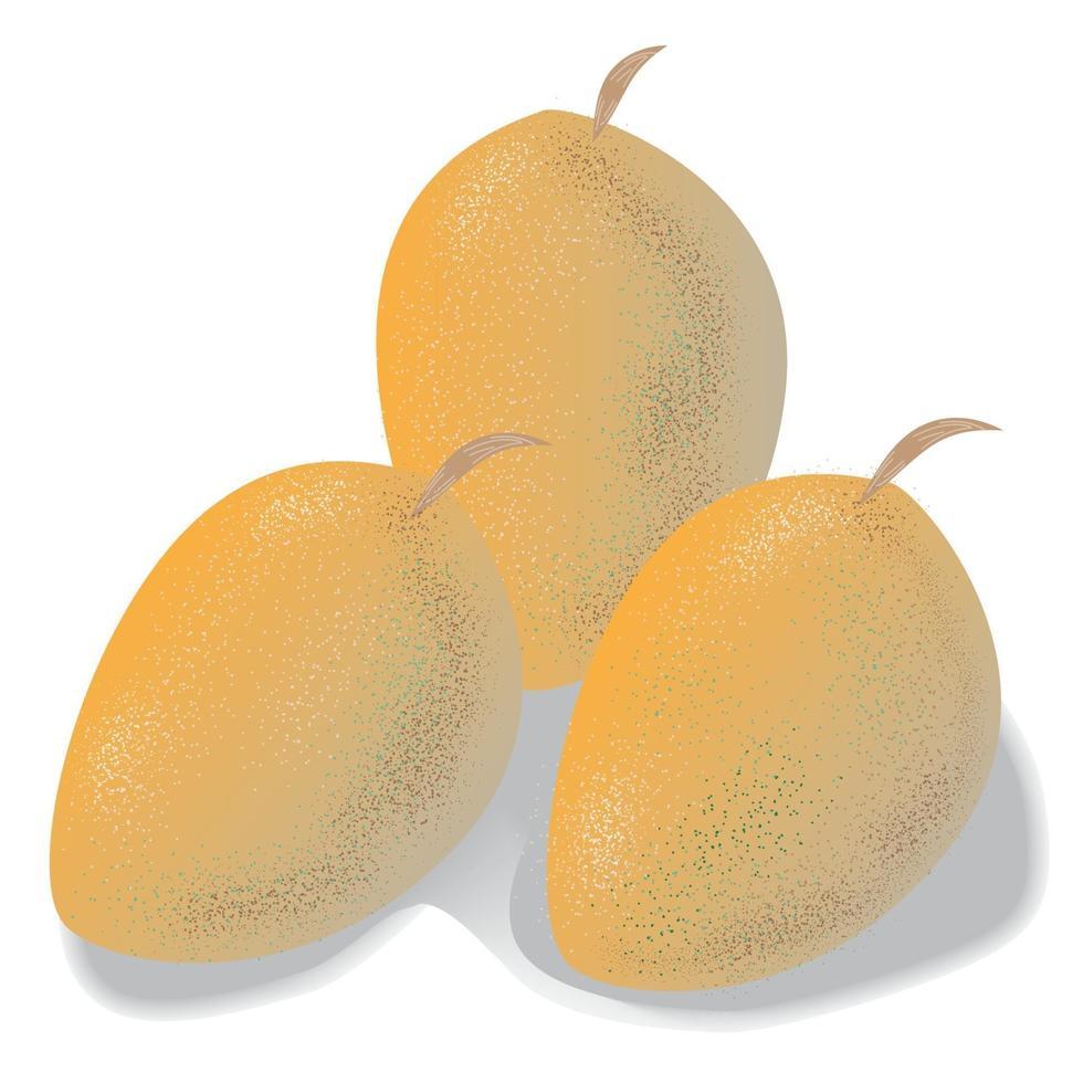 Fresh Mango Fruit vector