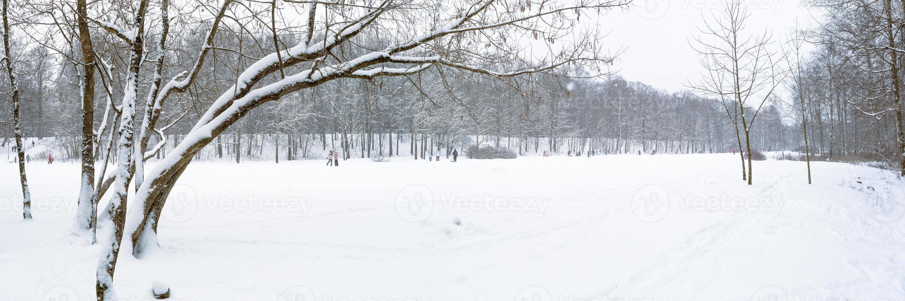 Winter forest landscape panorama in December on the eve of Christmas photo