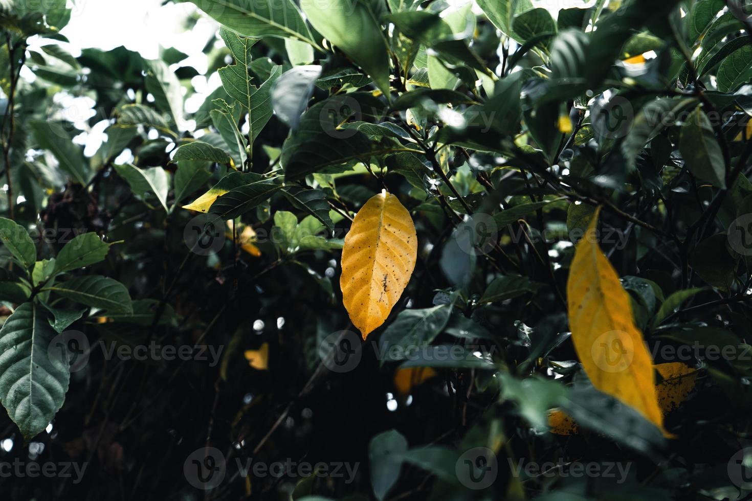 El otoño deja el primer amarillo en el jardín. foto