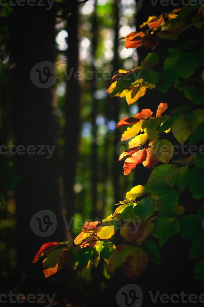 hojas de otoño en el bosque iluminado por el sol foto