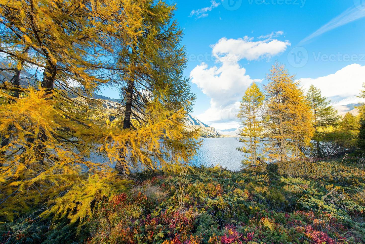 Autumn colors near an alpine lake photo