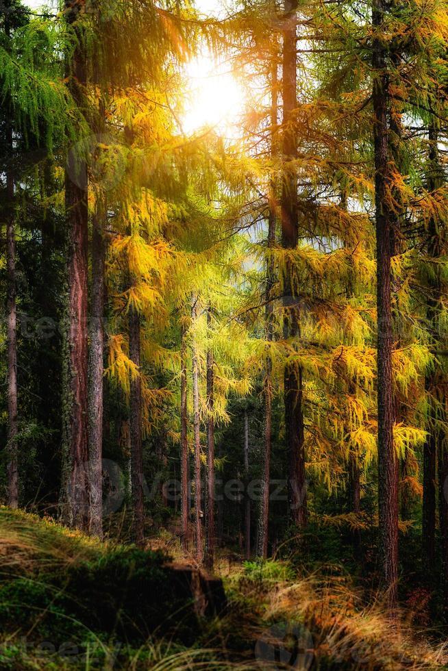 otoño en el bosque foto