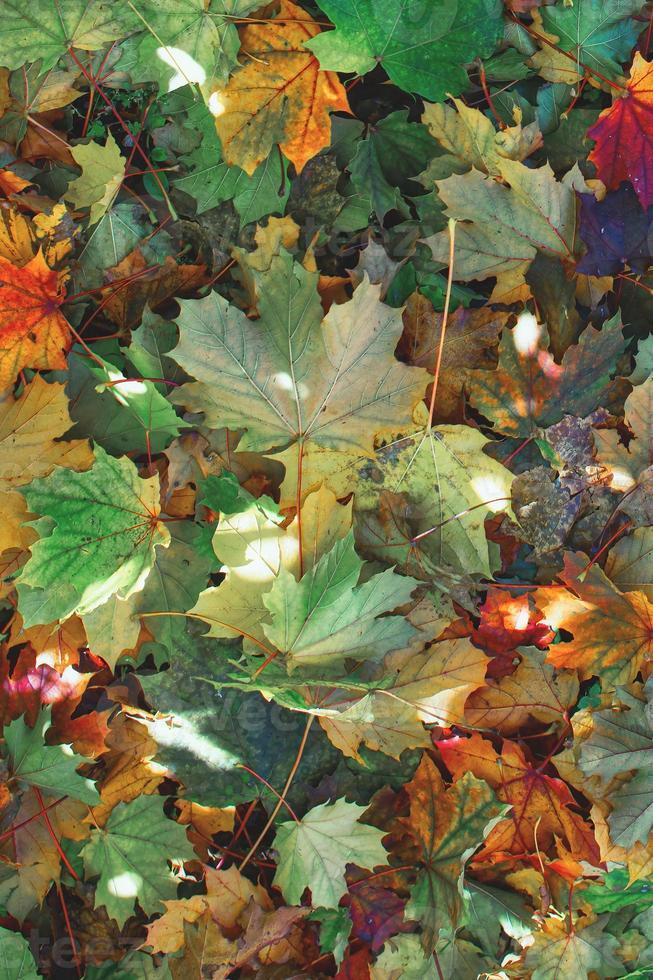 hojas de otoño recién caídas de plantas foto