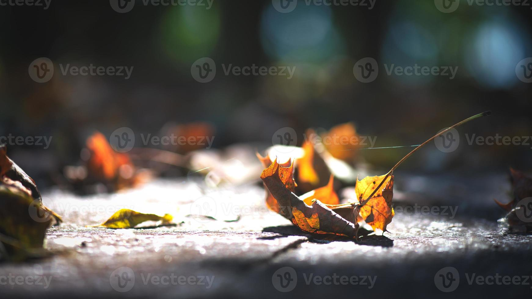 Delicate autumn leaves on the ground among the rays of the sun photo