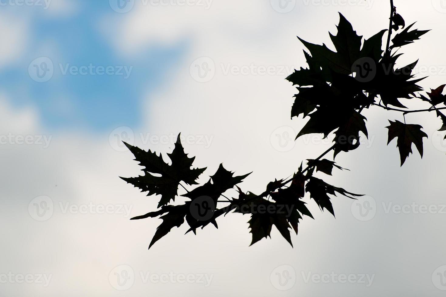 hojas en silueta foto
