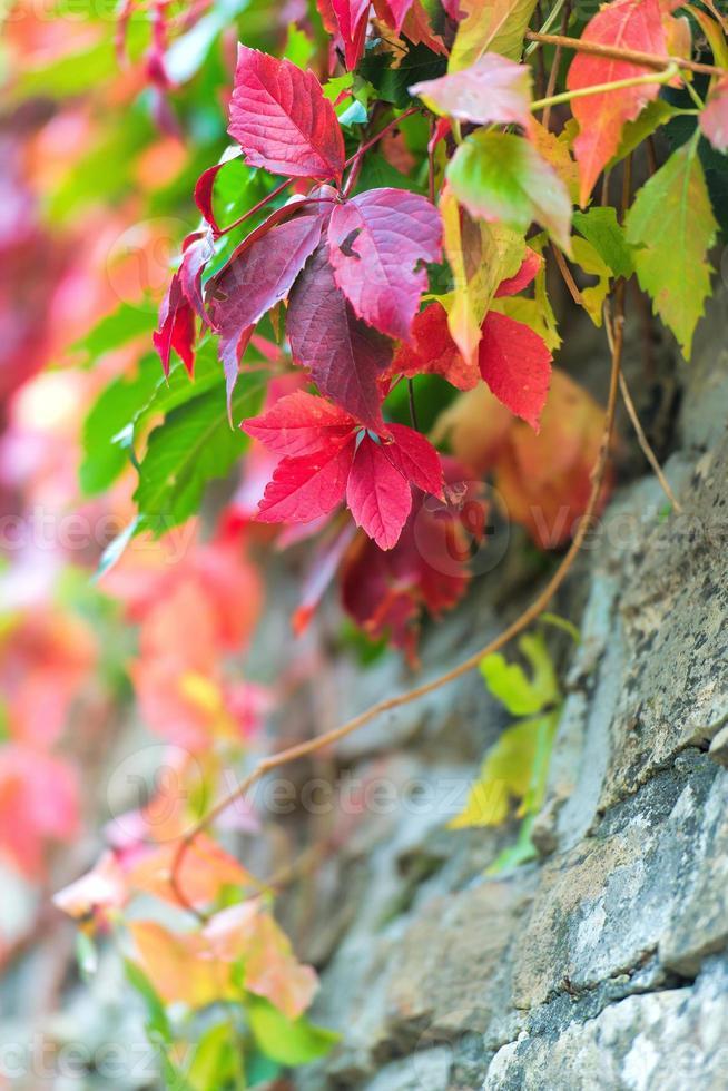hojas de colores de otoño foto