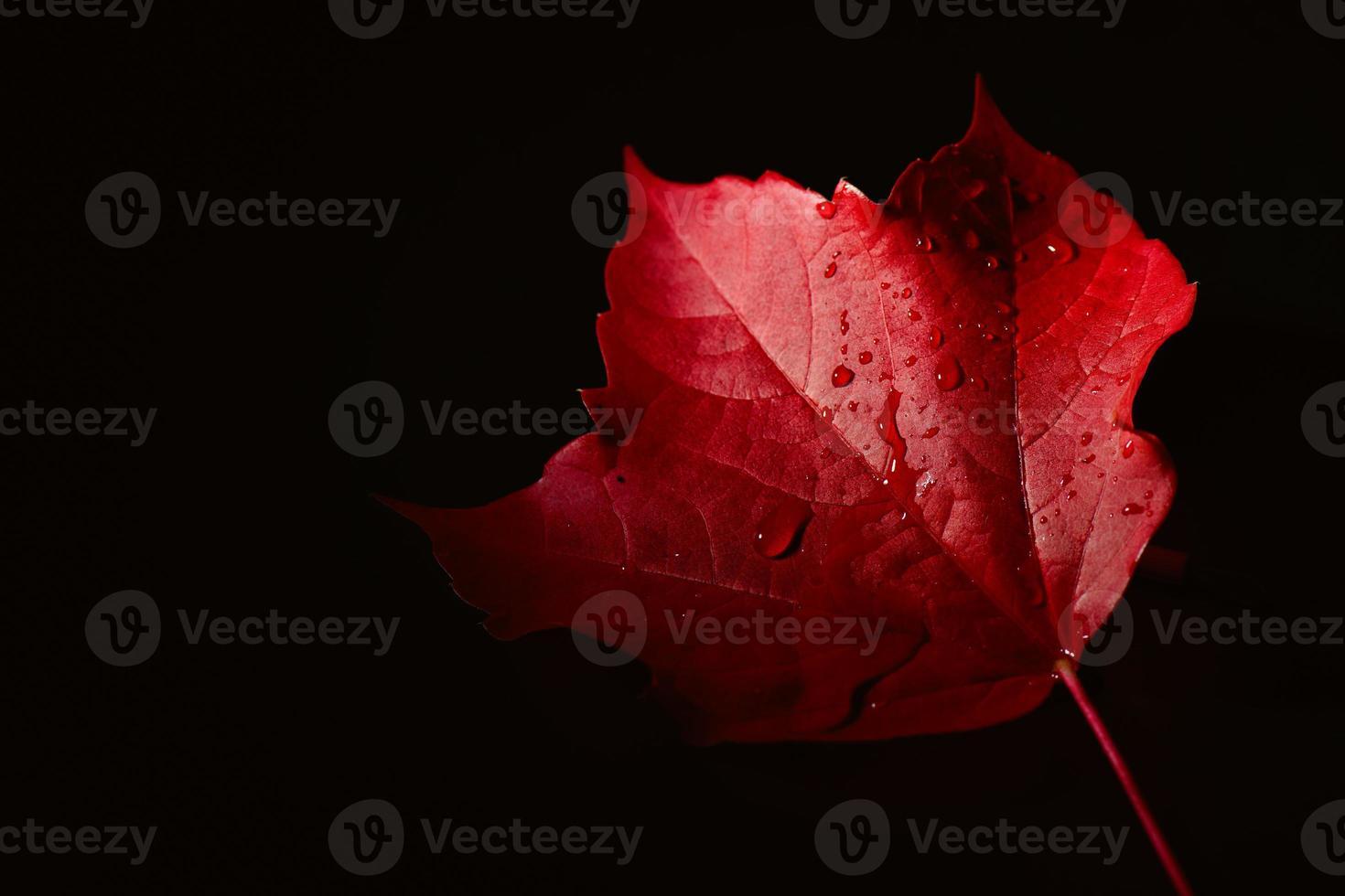 hoja de otoño roja con gotas de agua lloviendo foto