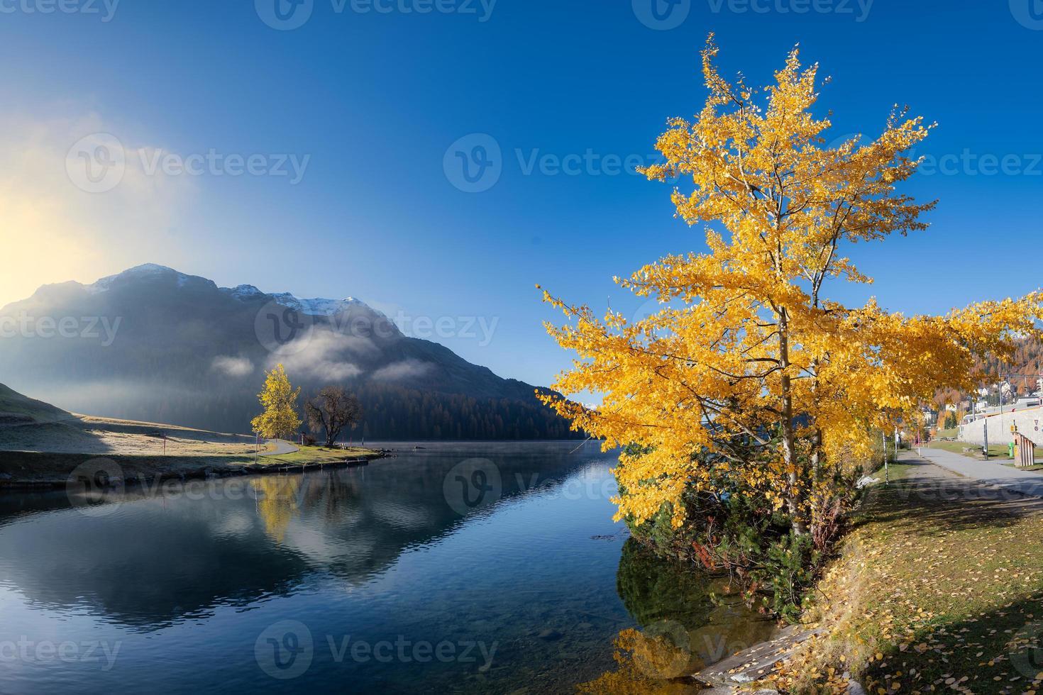 Trémolo de álamo en el lago de Sankt Moritz en Suiza foto