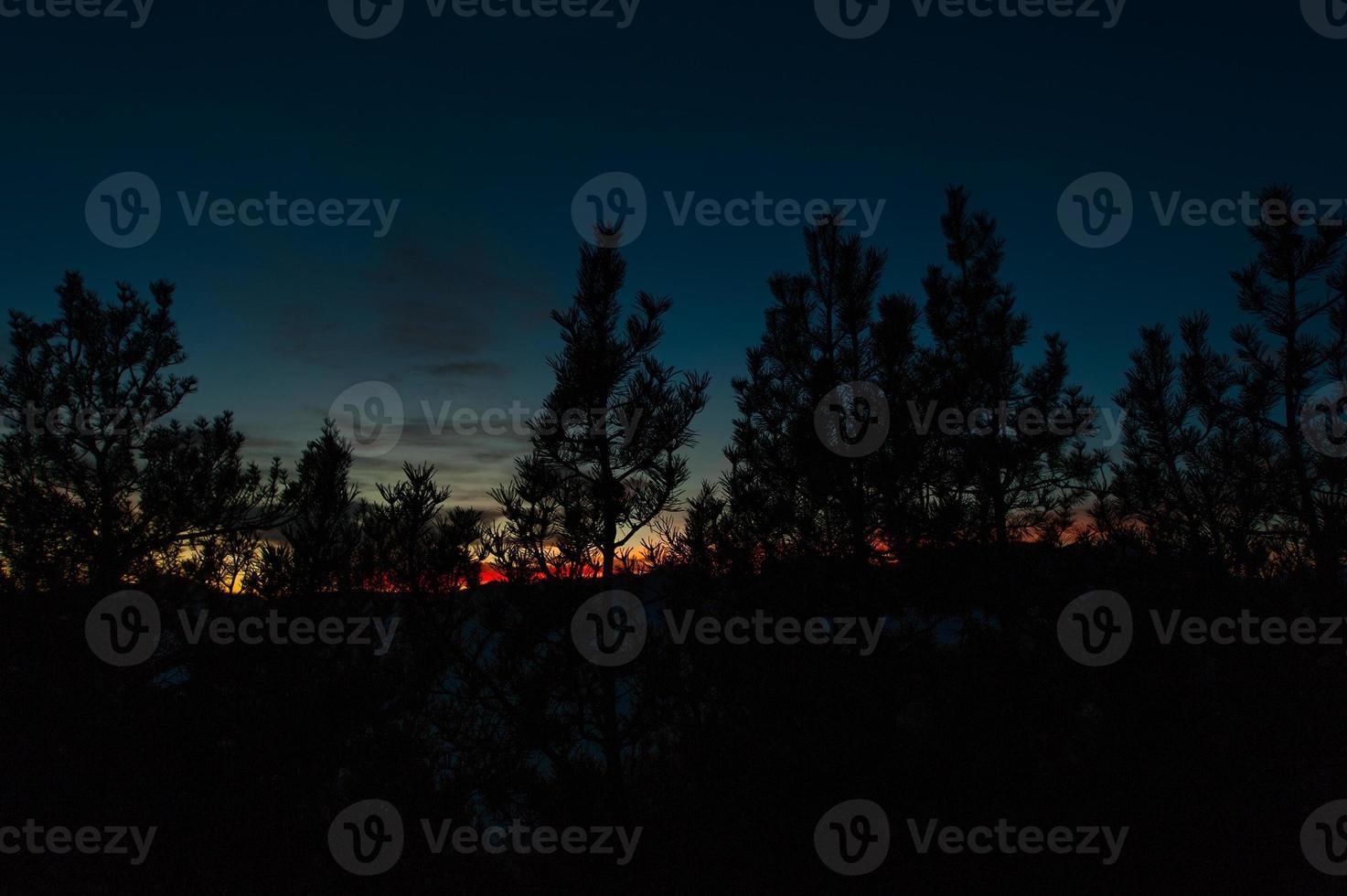 puesta de sol roja en la selva negra foto