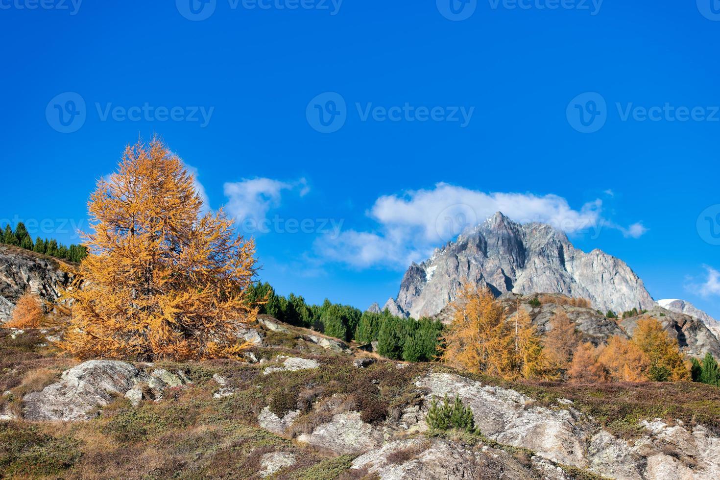 montaña rocosa en paisaje otoñal con un alerce de color dorado foto