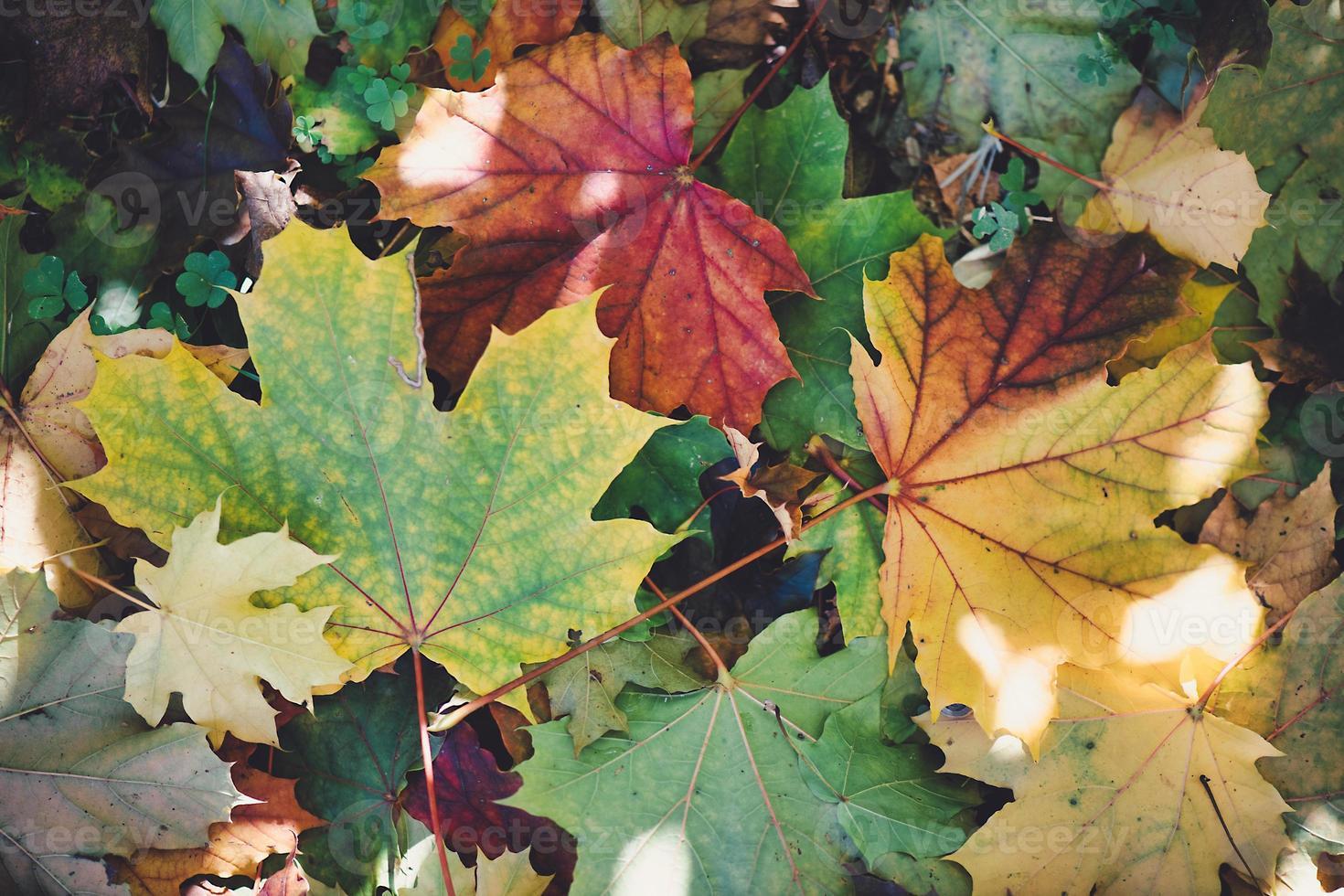 detalles de hojas recién caídas en el otoño foto