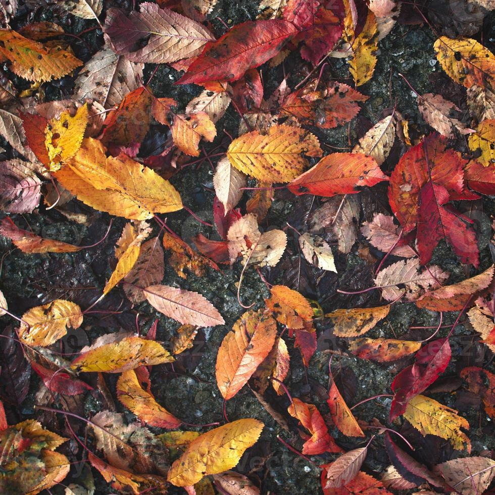 hojas de otoño mojadas caídas sobre el pavimento foto