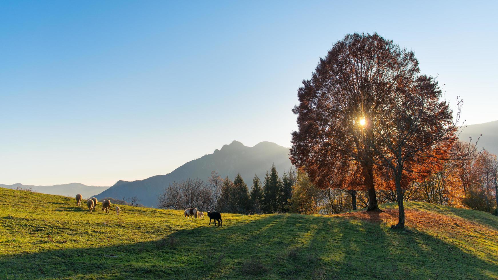 escena de pastos de montaña en otoño foto