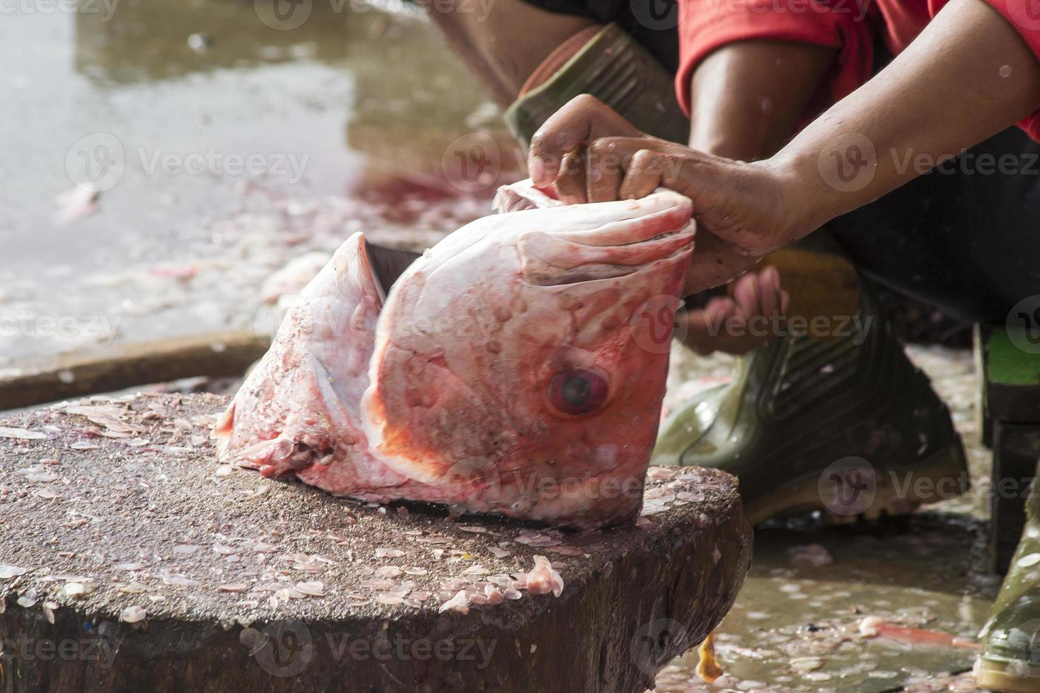 The assorted seafoods sold in fish market photo