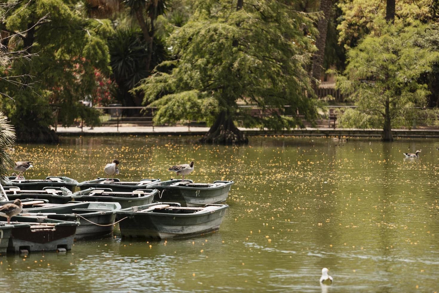 barcos por edge lake park foto