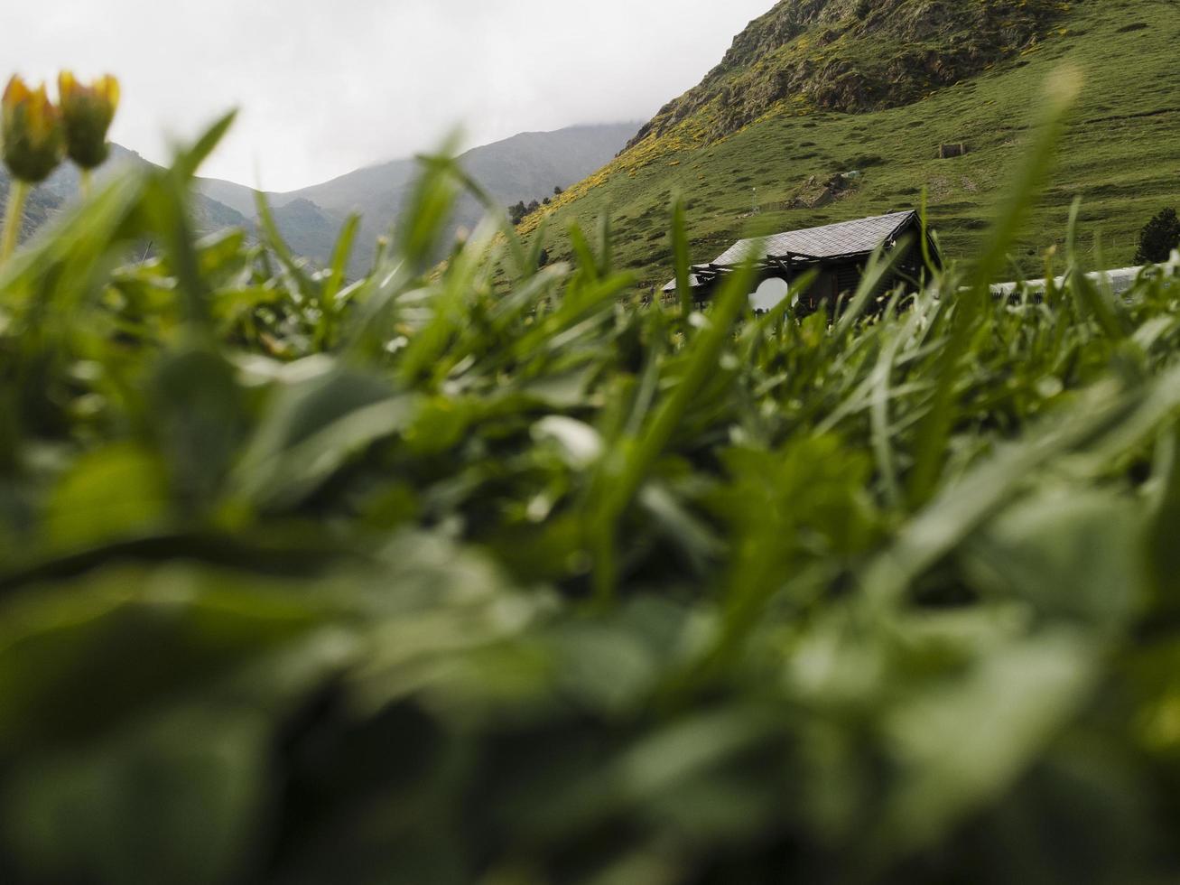 Close up details grass field photo