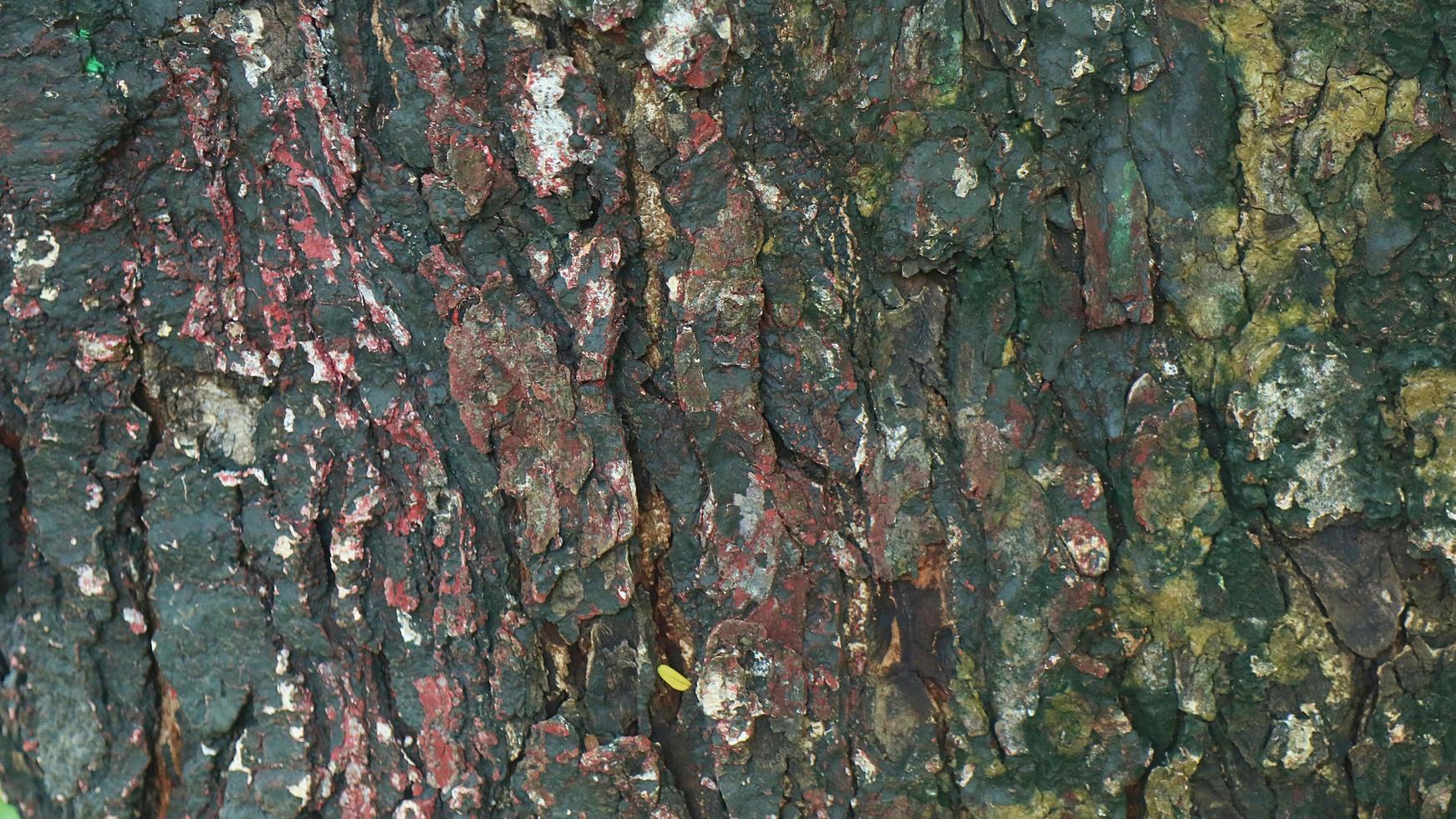 textura de un viejo árbol de madera foto