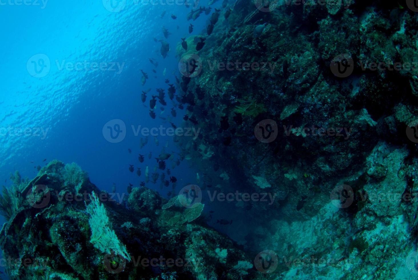 increíbles arrecifes de coral foto