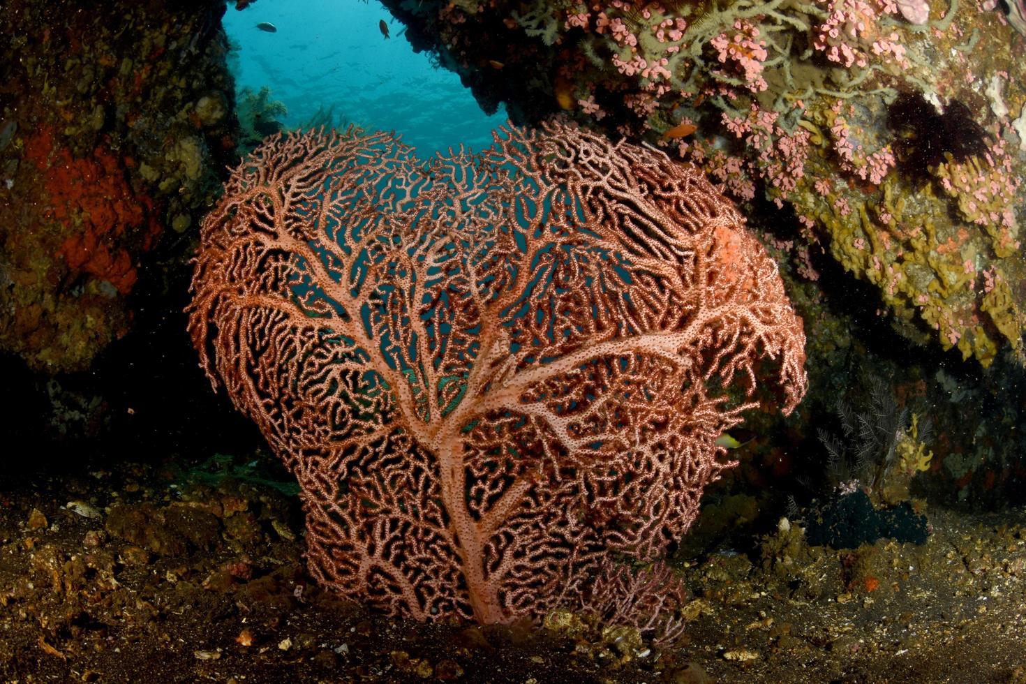 Amazing hard coral in Bali sea photo