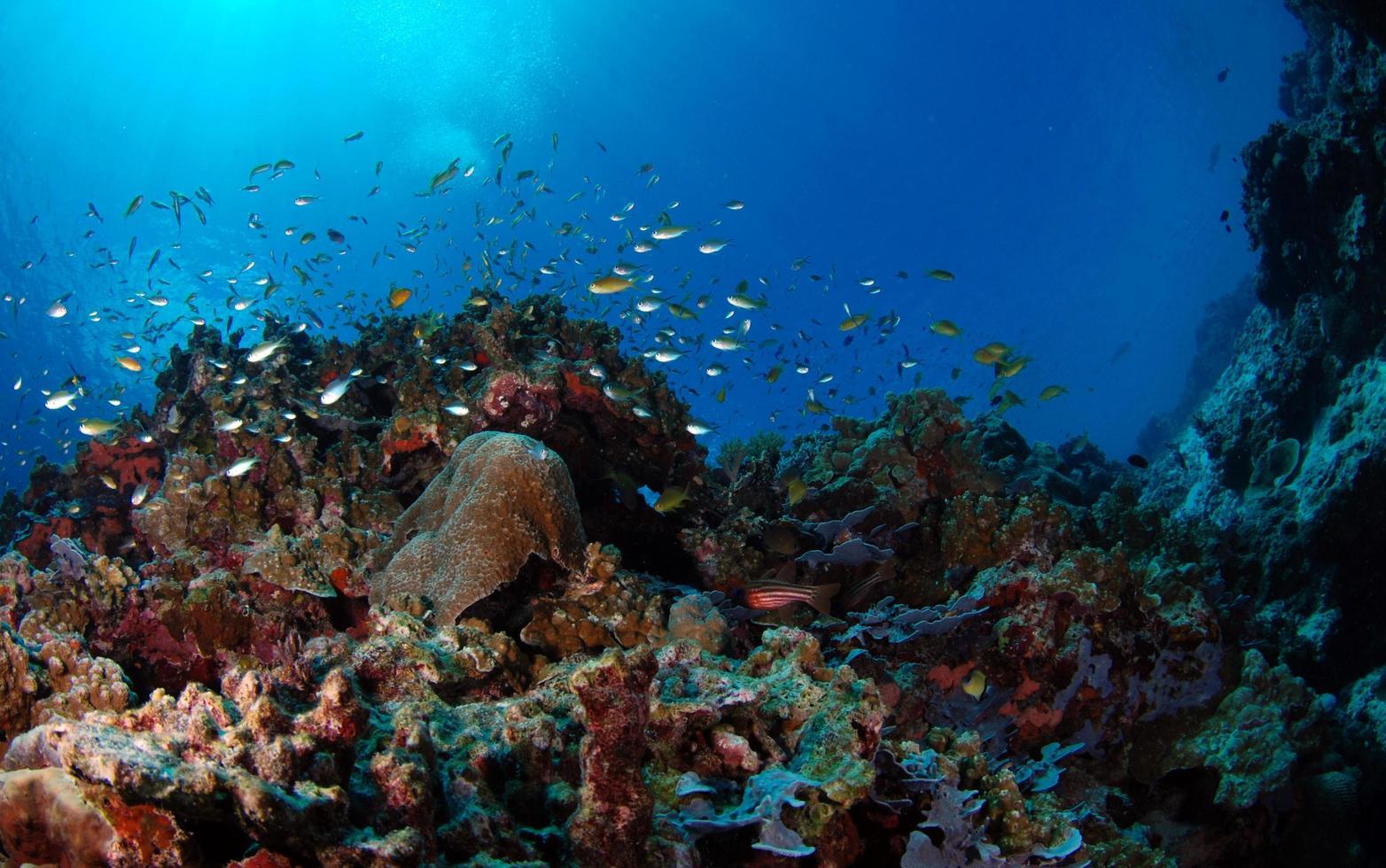 Underwater background. Coral reef of Philippines photo