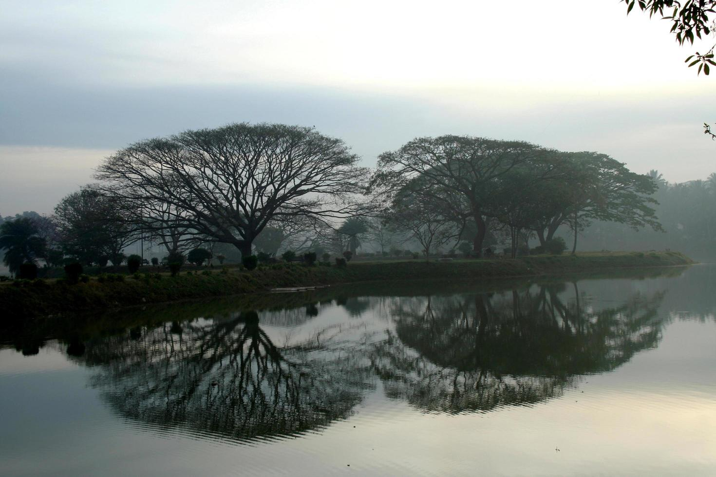 Trees and reflection photo