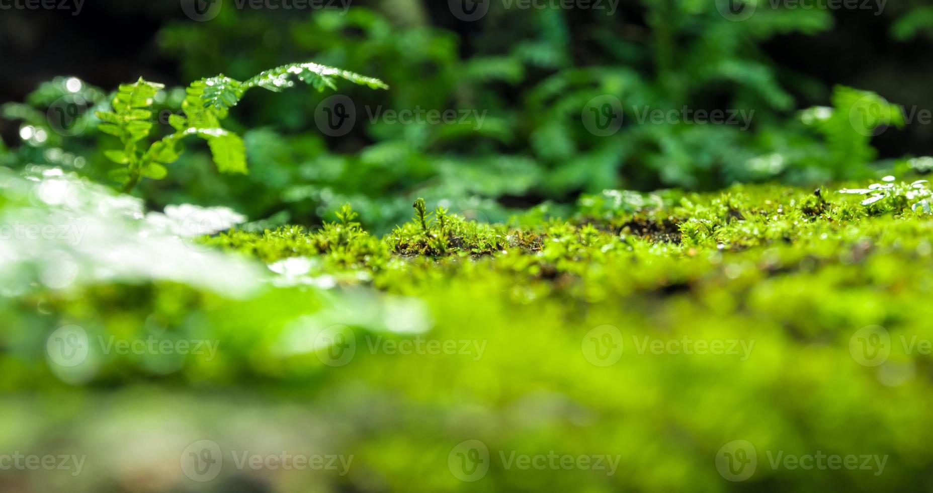 Frescura verde musgo y helechos que crecen en la selva foto