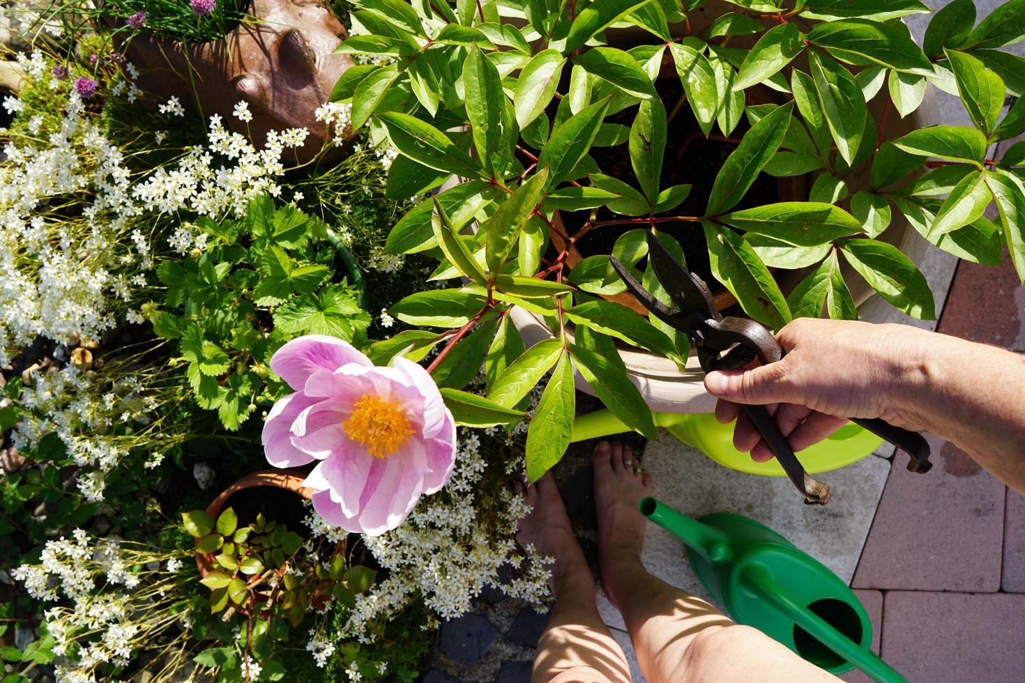 Woman watering the garden photo