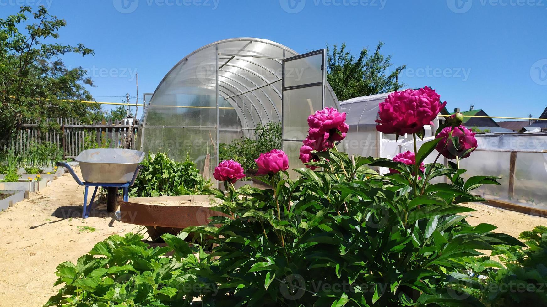 invernaderos y herramientas de jardín en su cabaña de verano. foto