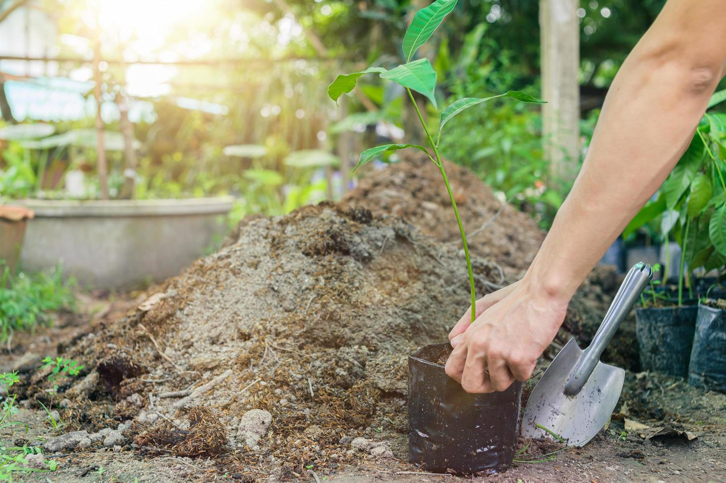gente plantando árboles en bolsas de plástico. foto