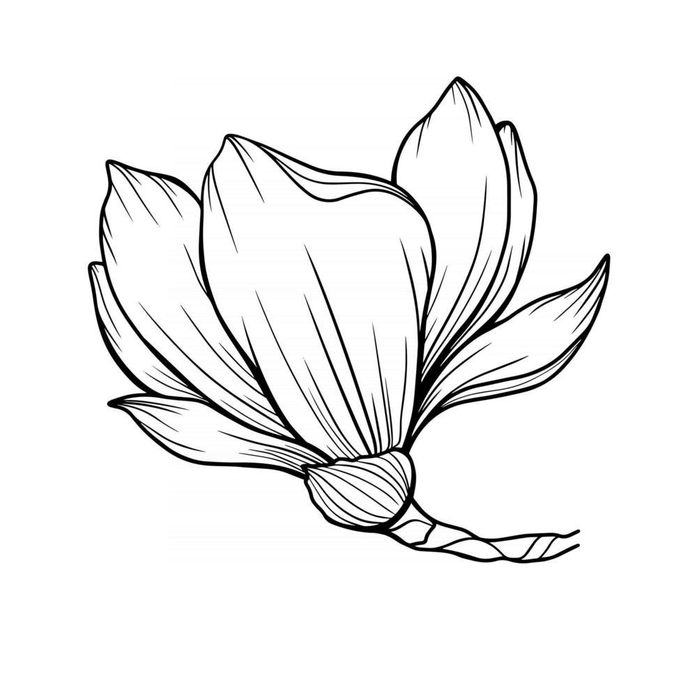 Magnolia Flower Outline Magnolia LIne Art Line Drawing vector