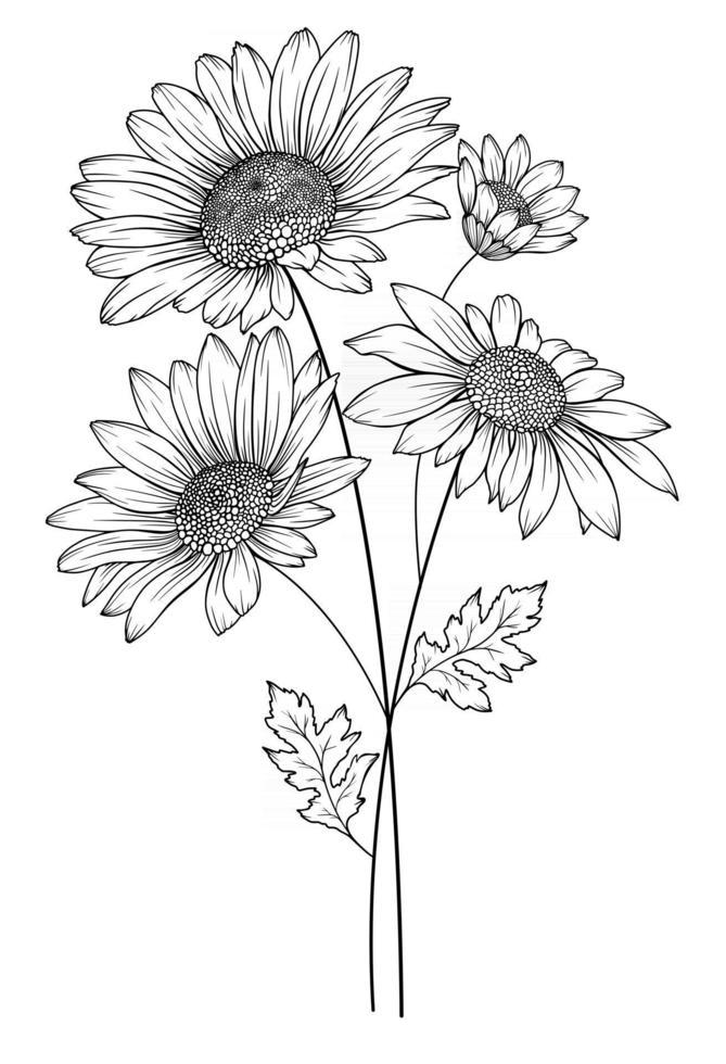 Daisy Flower Outline Daisy LIne Art Line Drawing chamomile outline vector