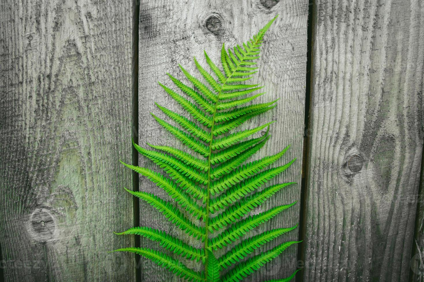 Fern leaves on the background of the old wooden background photo