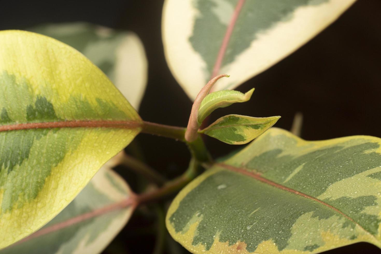 The indoor plant textures details photo