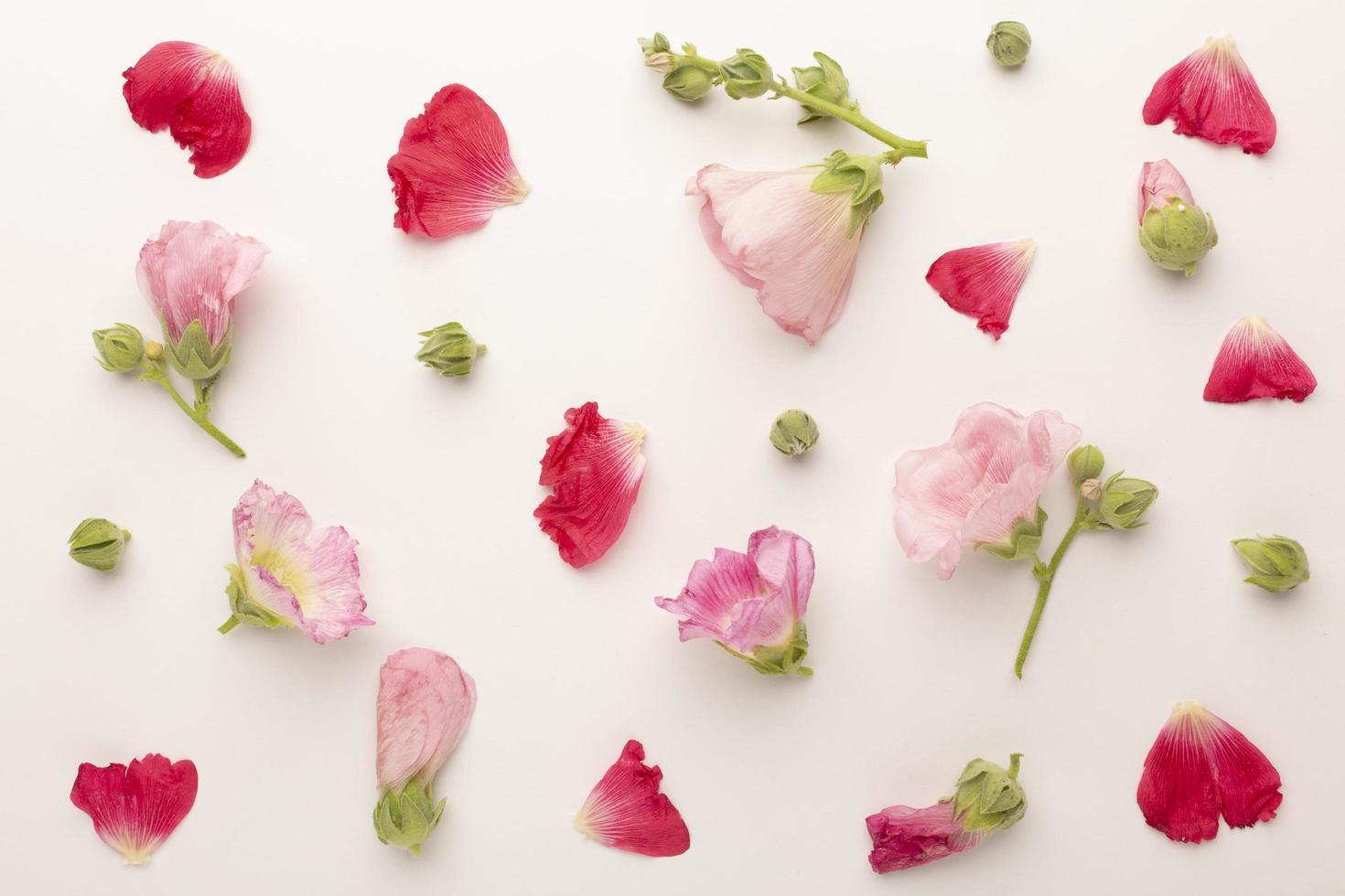 la vista superior composición flores foto
