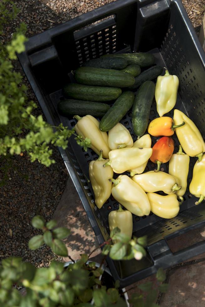 vista superior de verduras frescas de invernadero foto