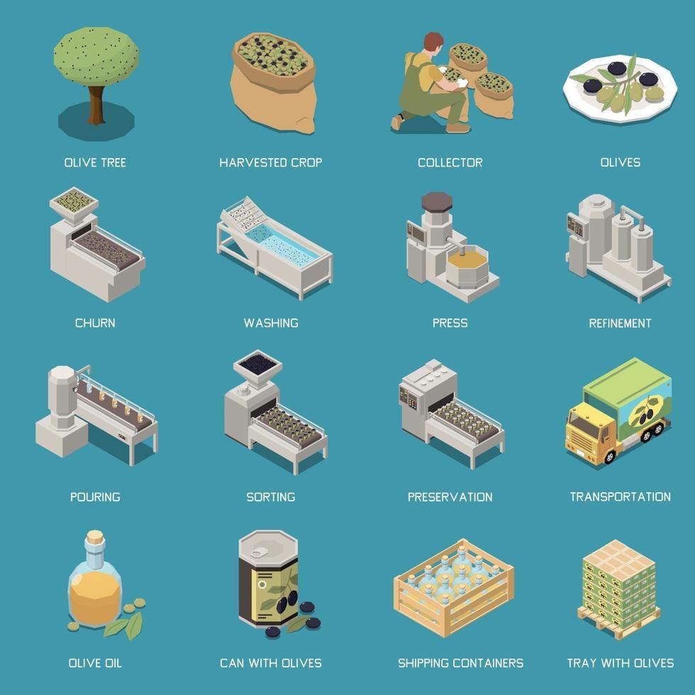 conjunto de iconos de producción de aceitunas vector